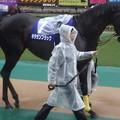 Photos: キタサンブラック(4回東京9日 11R 第156回 天皇賞(秋)(GI)出走馬)