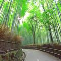 写真: 竹トレイル