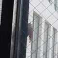 写真: 蝉の鳴き声で起こされた(>_<)。