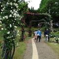 2017.5.13靭公園バラ祭