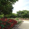 2015.5.31大井戸公園バラ園