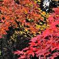 蕎麦屋の紅葉