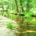 写真: 小川の流れ