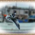 自由に飛ぶ!