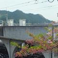 桜とJR五日市線