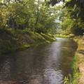 忍野八海近くの川   2014年6月撮影