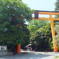 Photos: 氷川神社 鳥居