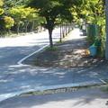 Photos: 軽井沢タバコ屋前丸ポスト