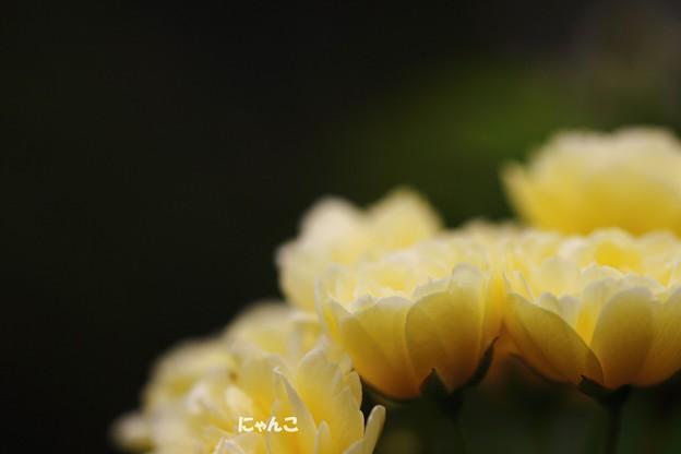 写真: ~soubi~