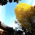 Photos: ~銀杏とお堂と鐘楼と~