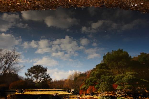 写真: ~池のキャンバス~