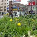 写真: 街角の春