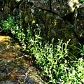 写真: 坂本の水路