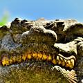 写真: 金歯の狛犬さん