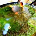 写真: 緑に落ちる雫