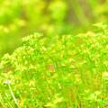 Photos: コケの花?