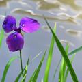 三角形の花