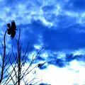 写真: 碧い空に