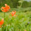高原らしい花