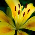 写真: 黄色にチャレンジ
