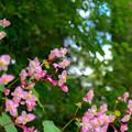 写真: ピンクの隙間から空が