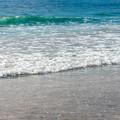 写真: 浜辺をお散歩