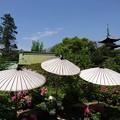 写真: 上野 東照宮 ぼたん苑