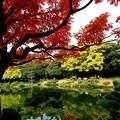 写真: 東京 下町の秋