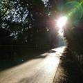 写真: 朝 散歩