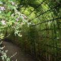 写真: 萩のトンネル