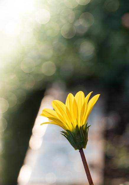 写真: 太陽に向かって