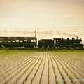写真: SLと緑のじゅうたん。