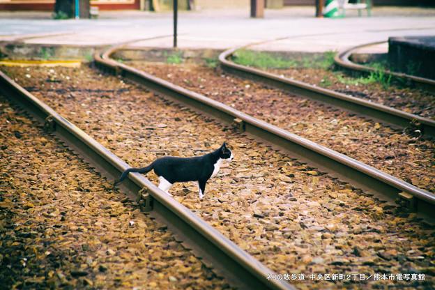 ネコの散歩道。