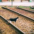 写真: ネコの散歩道。