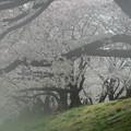 写真: 春はあけぼの