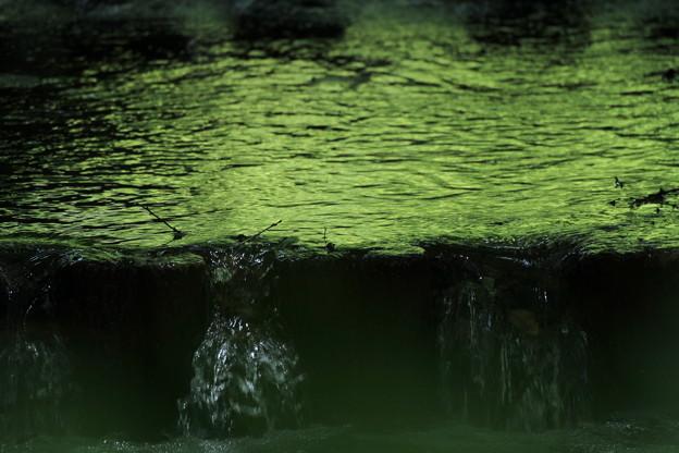 Photos: 緑を秘めて~