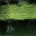 写真: 緑を秘めて~