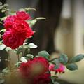 Photos: 薔薇の秘密