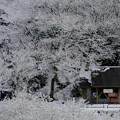 写真: 11月に降る雪
