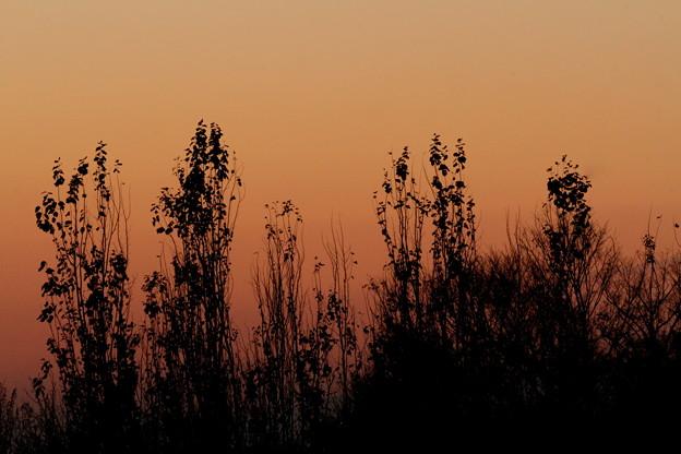 写真: 初冬の夕暮れ