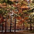 写真: 森林展示館前広場7