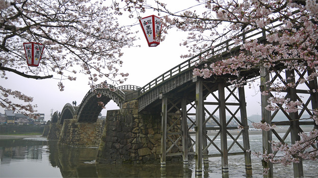 桜の錦帯橋。曇り・・・(14)