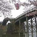Photos: 桜の錦帯橋。曇り・・・(14)