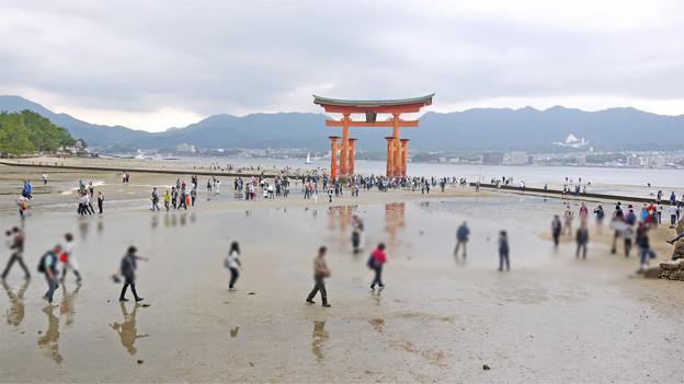 宮島・干潮時の大鳥居(1)
