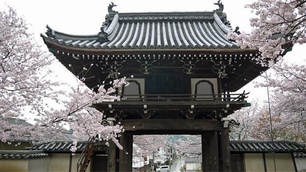 龍頭山照蓮寺(5)