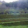 写真: 石見銀山(19)清水谷製錬所跡