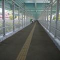 新西海橋(6)