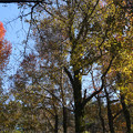 油山市民の森(2)