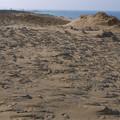 鳥取砂丘(8)砂柱
