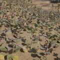 鳥取砂丘(11)